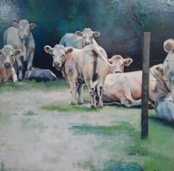 Vaches dans un pré (Kimberly ARING)